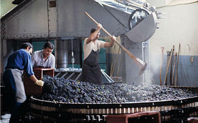 Отжим винограда на производстве