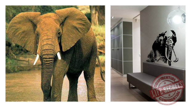 Идеи интерьера из природы - животные Африки