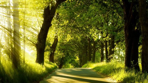 Воздух и солнце, два самых эффективных лекарства