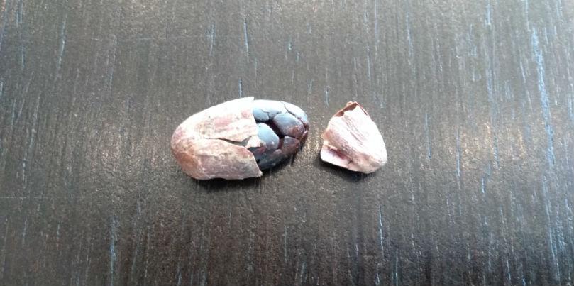 Две составляющие какао боба