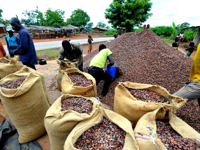 Процесс хранения и упаковки какао-бобов